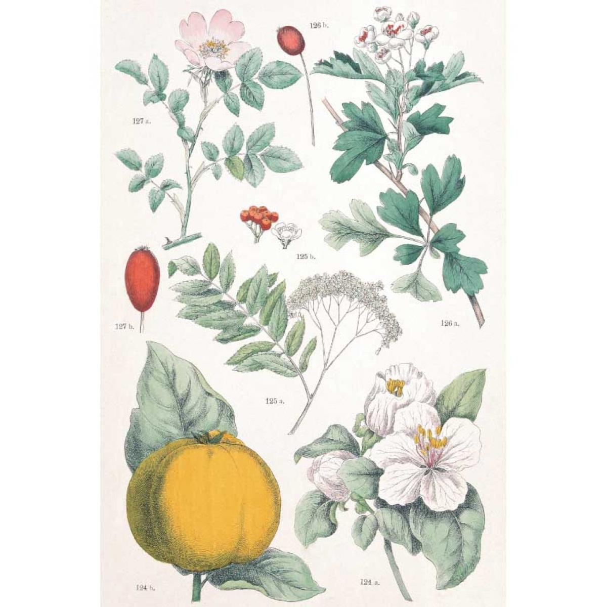 только ботаническая энциклопедия растений с иллюстрациями движения