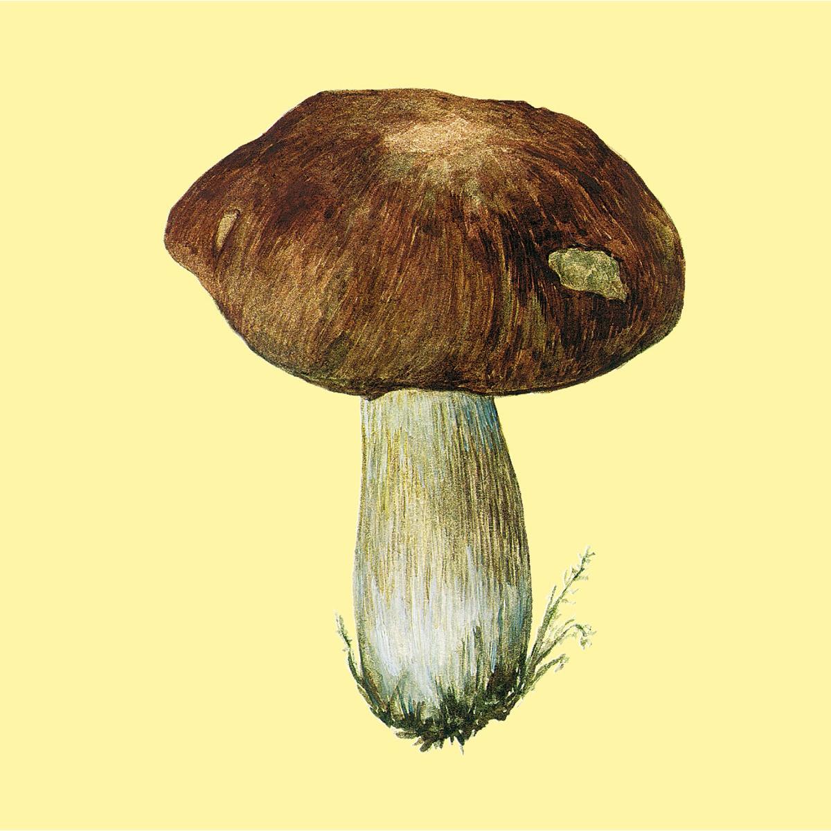 Красивые картинки грибов для детей, надписью лысый картинки