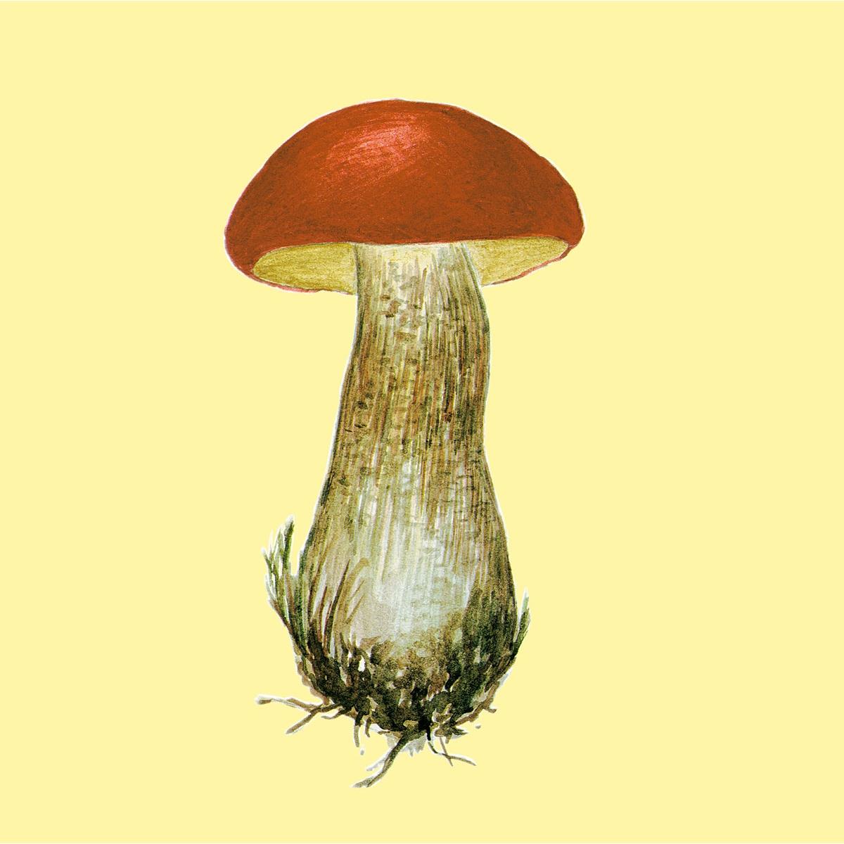 Красивые картинки грибов для детей